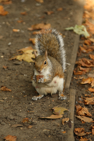 readily: squirrel in the forest