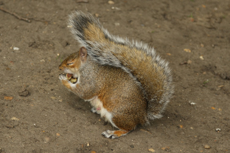 readily: Happy squirrel Stock Photo