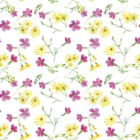 Wild carnation and camomile seamless on a white background Stock Photo