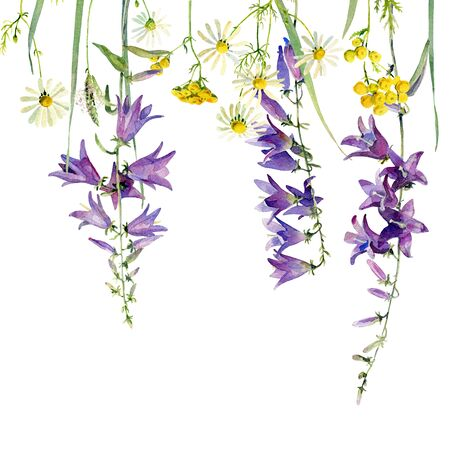 Background of wild flowers of bluebell, chamomile and tansy on a white background