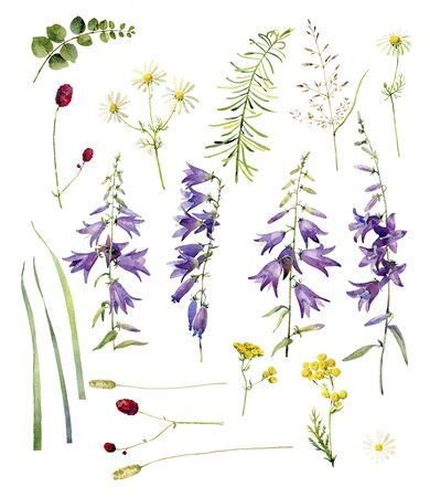 Set of wild watercolor flowers Stok Fotoğraf