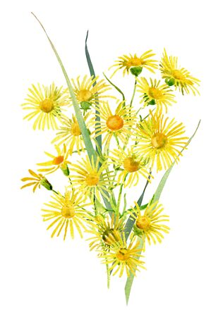 A small bouquet of watercolor yellow wild flowers on a white background. For greetings, invitations, weddings, anniversaries, birthdays