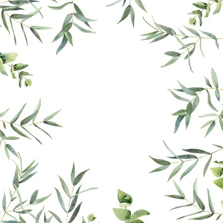 Watercolor background of eucalyptus leaves on a white background. Zdjęcie Seryjne