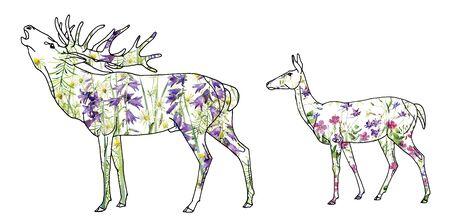 Deer with a deer female of watercolor wild flowers 写真素材