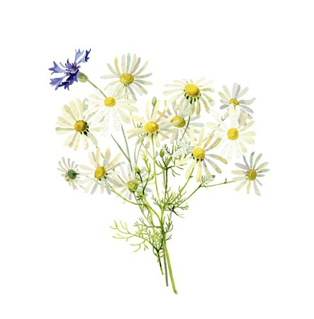 Bouquet of wild watercolor daisies and cornflower