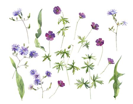 Set of watercolor red and blue wild flowers