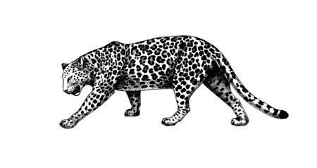 Vecteur d'éclosion de graphiques de marche de léopard Vecteurs