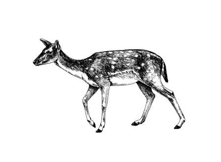 fallow deer doe hatched Stock Illustratie