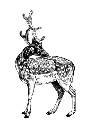 Fallow deer scratched his back 向量圖像