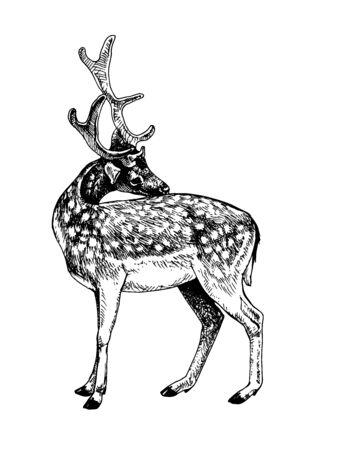 Fallow deer scratched his back Illustration