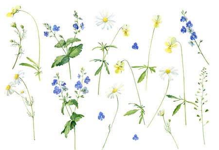 Set of watercolor flowers chamomile, veronica and violets Stock fotó