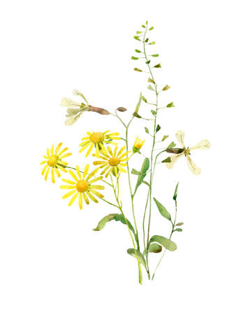 Watercolor flowers and yellow chamomile on a white background