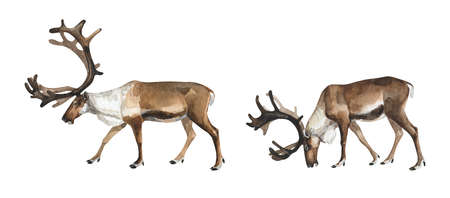 Set of watercolor reindeer on white background