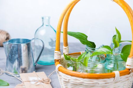 gardener's desk with garden tools, seeds and plant basket for planting concept spring work in the garden Stock Photo