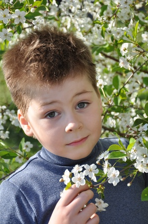 7 8 years: The boy and the cherry blossom in spring Stock Photo