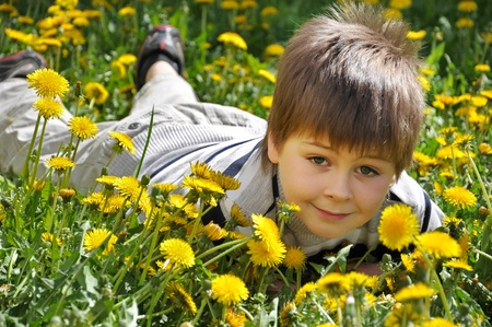 The boy lies in the dandelions photo