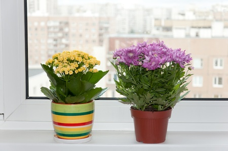 Indoor plants are on the box. fragment of the interior Stock Photo - 10815033