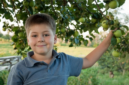 7 9 years: Portrait of a boy on a background of green apples with apples