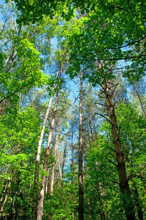 beautiful woodland: A beautiful woodland scenery in the summer on a sunny day
