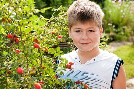 A boy of about rosehip with ripe fruits photo