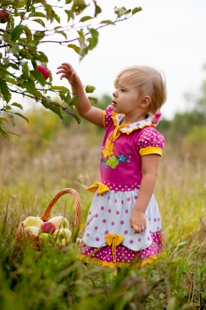Little girl 2.5 years to pick apples photo