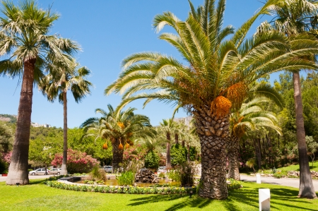 Palm garden with date palms Imagens