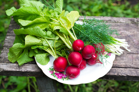 Young radishes and green onions on a plate