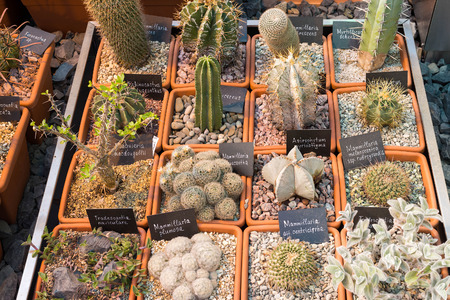 types of cactus: Cactus and succulents plants in a garden