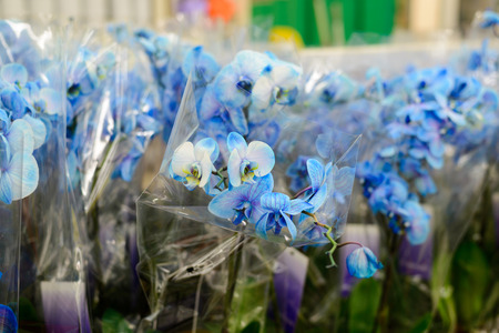 blue orchid: A Blue orchid close up in store