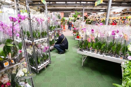 retail chain: MOSCA, RUSSIA - 4 Marzo 2015: Orchidee nel negozio OBI a Mosca Russia. OBI � una catena di negozi di vendita al dettaglio tedesche e la costruzione di 570 negozi in tutto il paese.