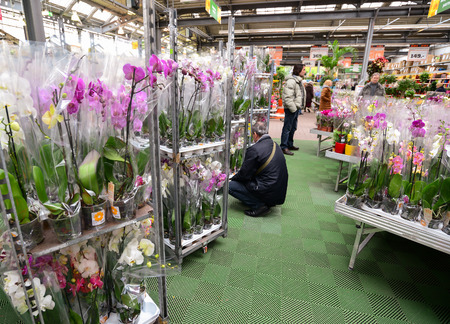 country store: MOSCOW, RUSSIA - MARCH 04 2015: Orchids in the OBI store in Moscow Russia. OBI is a German retail chain stores and building 570 stores across the country. Editorial