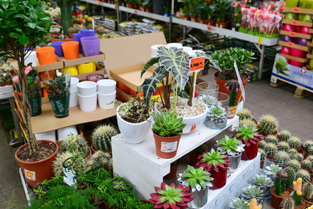retail chain: MOSCOW, RUSSIA - MARCH 04 2015: flowers in the OBI store in Moscow Russia. OBI is a German retail chain stores and building 570 stores across the country.