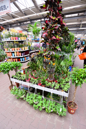 country store: MOSCOW, RUSSIA - MARCH 04 2015: flowers in the OBI store in Moscow Russia. OBI is a German retail chain stores and building 570 stores across the country.