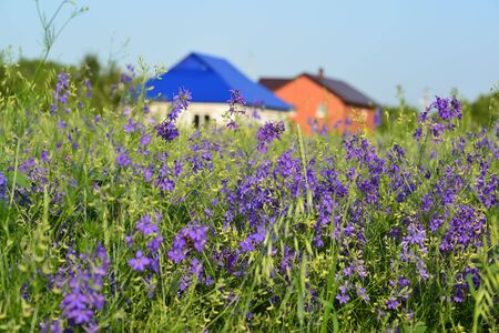 farmhouses: A Lawn with wildflowers in front farmhouses