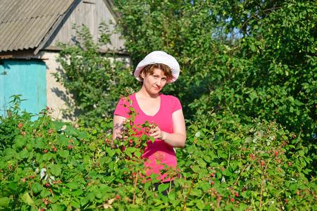 garden stuff: Woman reaps a crop of a raspberries in the garden Stock Photo
