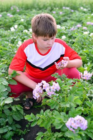 Jongen tiener aardappelen in de tuin