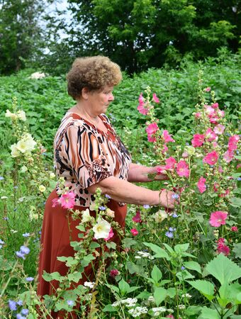mallow: Adult woman standing near a blooming mallow