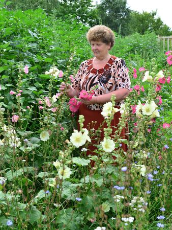 hollyhocks: Adult woman standing near a blooming mallow