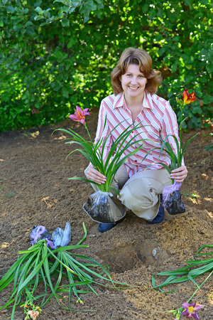 A Woman planting flowers in the garden Stock Photo