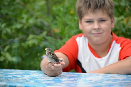 Jonge geel-beaked mus zit op de palm van kinderen
