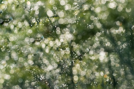 blurring: Blurring background from plants in the rain Stock Photo