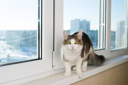 sill: Young cat sitting on a window sill