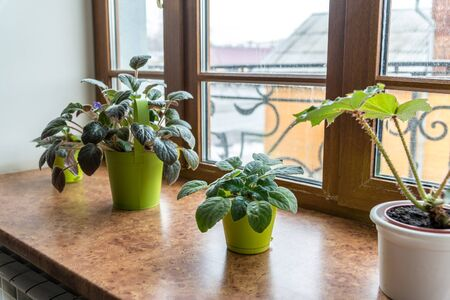 indoor plants in pots on the windowsill