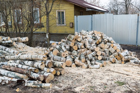 combustible: A pile of birch logs lying on the ground