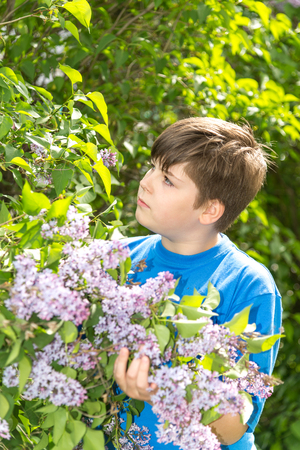 Portrait of boy in a park with blooming lilacs Stock Photo