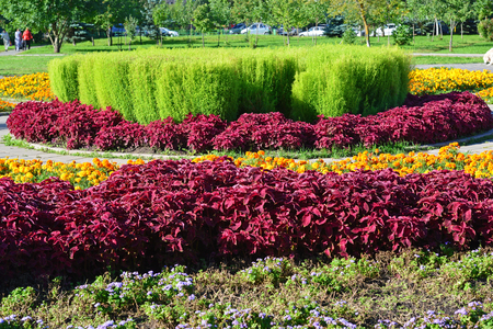 A Large flowerbed with a red coleus Stock Photo