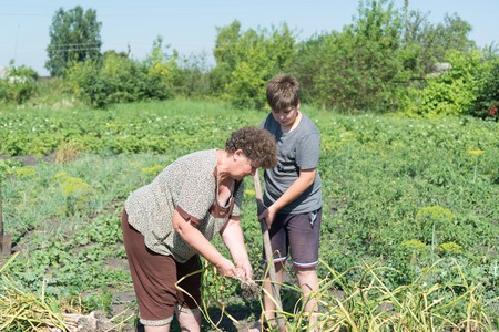 Grandmother with grandson harvested garlic harvest in the garden Stock Photo