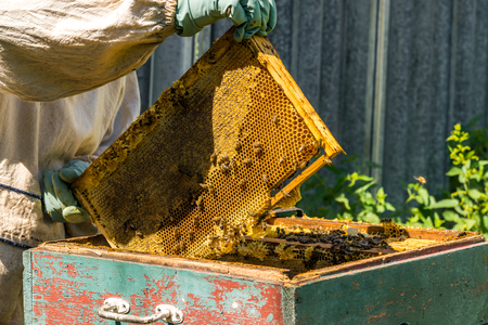 The beekeeper keeps the wax frame with ahoney