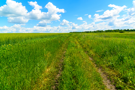 a country road among green grass in Russia