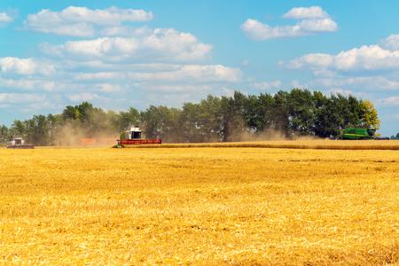 cosechadora: Agricultural machinery removes grain crops on the field in Russia Foto de archivo